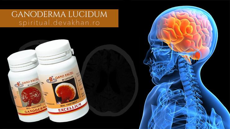 Ganoderma și obstrucțiile vasculare cerebrale, infarctul miocardic, apoplexia cerebrală și anghina pectorală