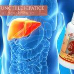 Ganoderma și tratamentul hepatitelor acute sau cronice și a disfuncțiilor hepatice